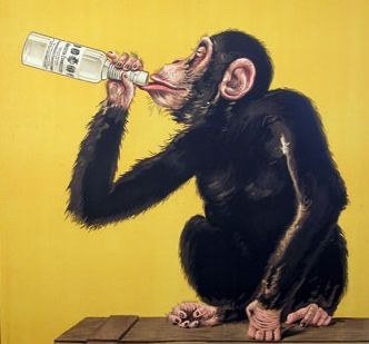 drunk chimpanzee